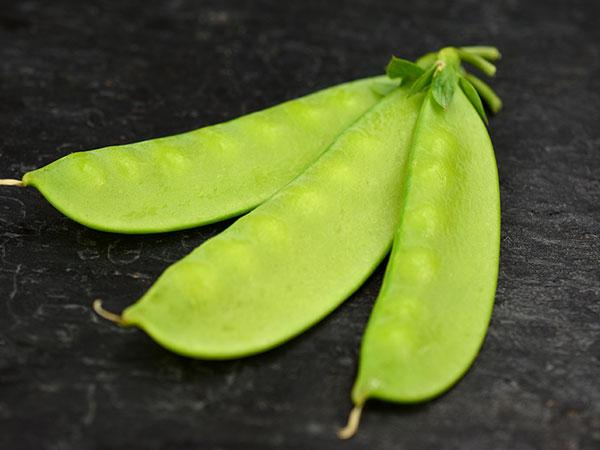 Mammoth Melting Sugar Snow Pea