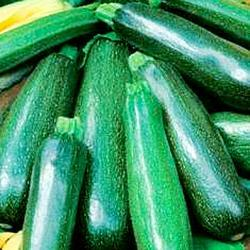 Zucchino – Summer Squash Nano Verde di Milano