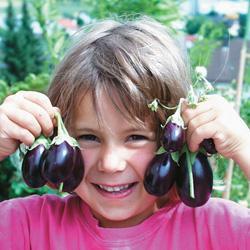 Eggplant Baby Rosanna F1 Hybrid