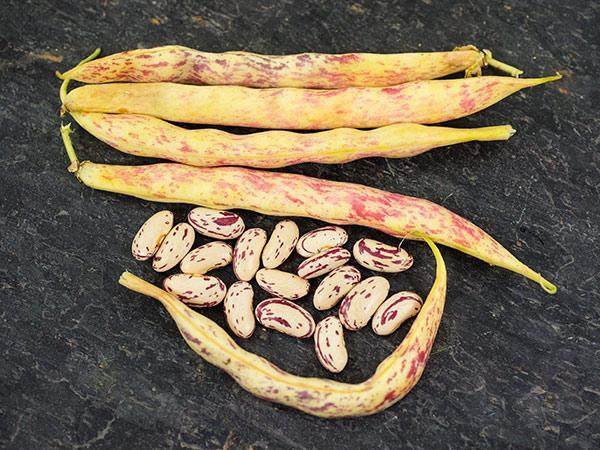Akha Striped Bean