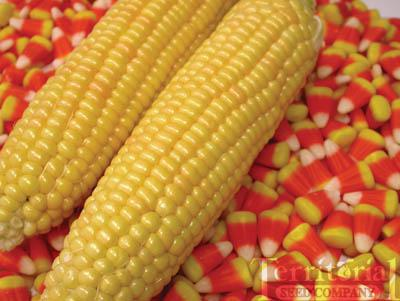Kandy Korn Corn