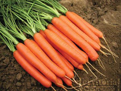 Romance Carrot