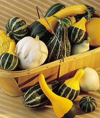 Squash, Ornamental Small Fancy Mixed Colors (Gourd)