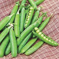 Northfield Garden Peas