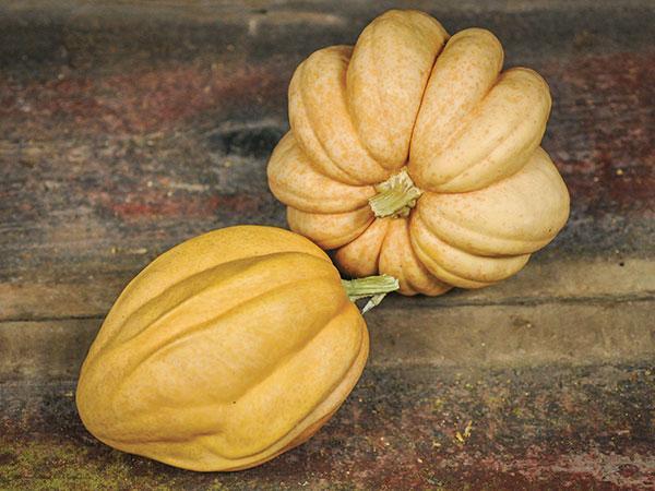 Thelma Sanders' Sweet Potato Squash