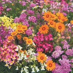 Wildflowers Fragrant Mixture