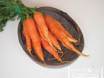 Merida Carrots
