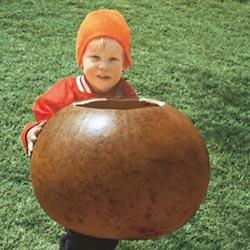 Bushel Gourd