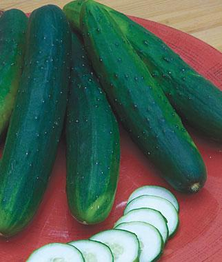 Cucumber, Sweet Burpless Hybrid