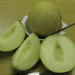 Melon Galia F1 Hybrid