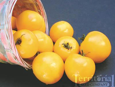 Taxi Tomato Conventional & Organic