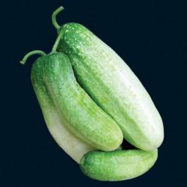 Delikatesse Cucumber