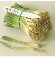 Ailsa Craig Exhibition Plants