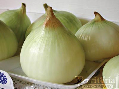 Onion Plants-Walla Walla