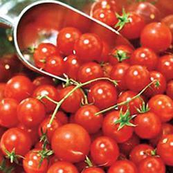 Honey Bunch Hybrid Tomato
