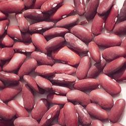 Dark Red Kidney Shell Beans