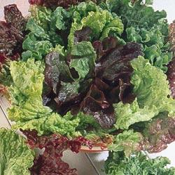 Bon Vivant Blend Leaf Lettuce