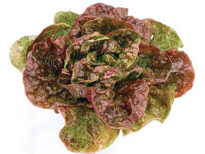 Speckles Lettuce Organic
