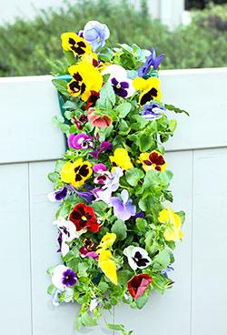 Mixed Pansy Vertical Garden