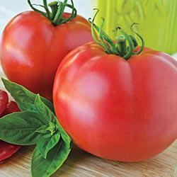 Pink Cadillac (VFF) Hybrid Tomato