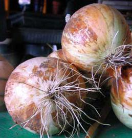 Onion, Valencia