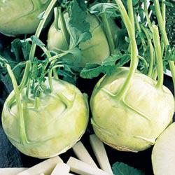 Early White Vienna Kohlrabi