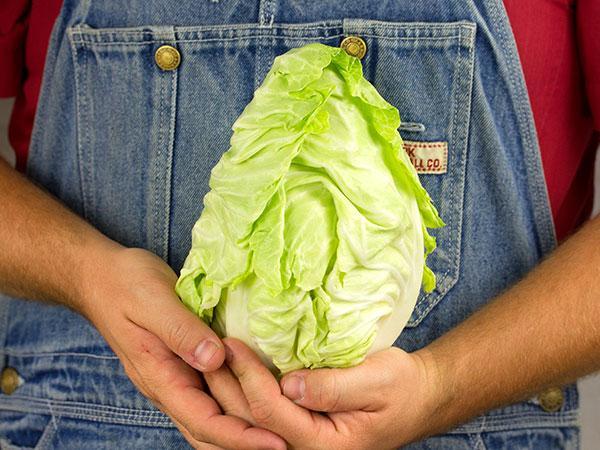 Bacalan De Rennes Cabbage