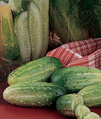 Cucumber, Burpee Pickler Hybrid