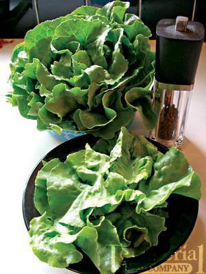 Optima Lettuce Organic