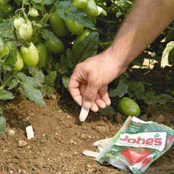 Tomato Fertilizer Spikes