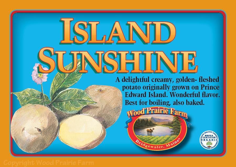 Island Sunshine Seed Potato