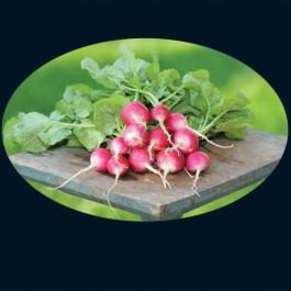 Scarlet Turnip Wht Tip