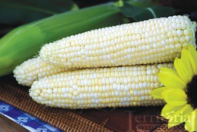 Luscious Corn Organic