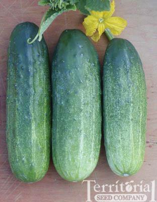 Mcpick Cucumbers