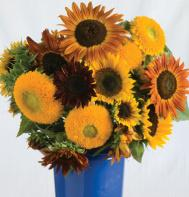 Johnny's Sunflower Collection