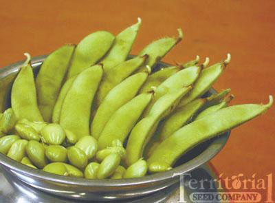 Misono Green Bean