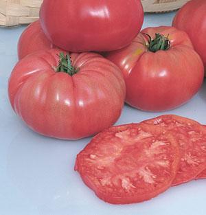 Tomato, Pruden's Purple