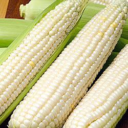 Cloud Nine (se) Sweet Corn