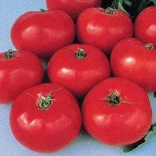Brandywine Tomato Grafted Plant