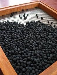 Garbanzo (Black Kabouli)