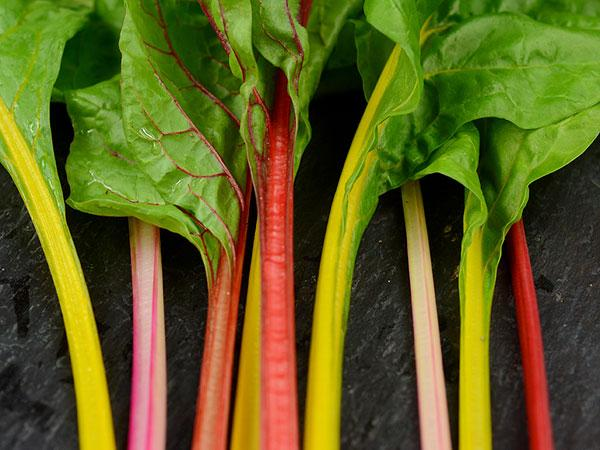 Five Color Silver Beet Chard