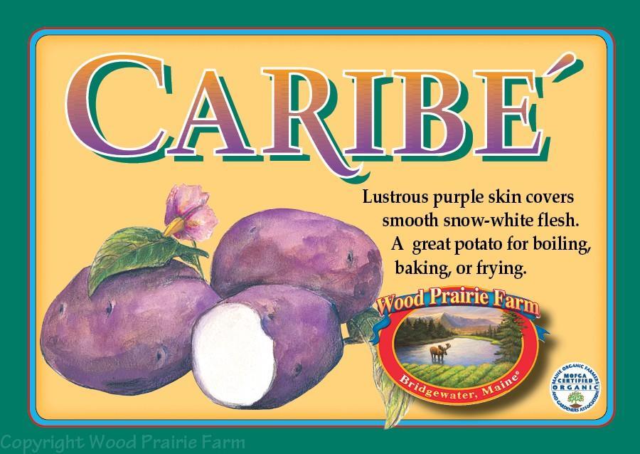 Certified Caribe Seed Potato