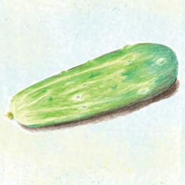Fin De Meaux Cucumber