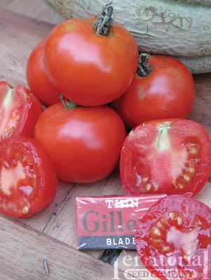 Matina Tomato Organic