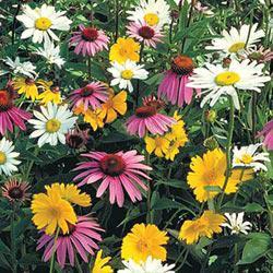 Shade Mix Wildflowers