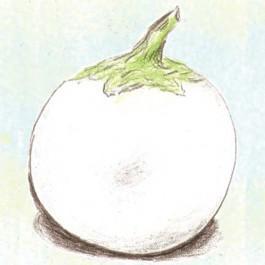 Lao White Eggplant