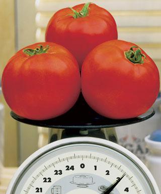 Tomato Plant Beefy Boy™ Hybrid