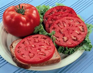 Park's Whopper CR Improved Hybrid Tomato Plant