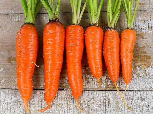 Kuroda Long 8  Carrot