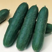 Akito F-1 Cucumber